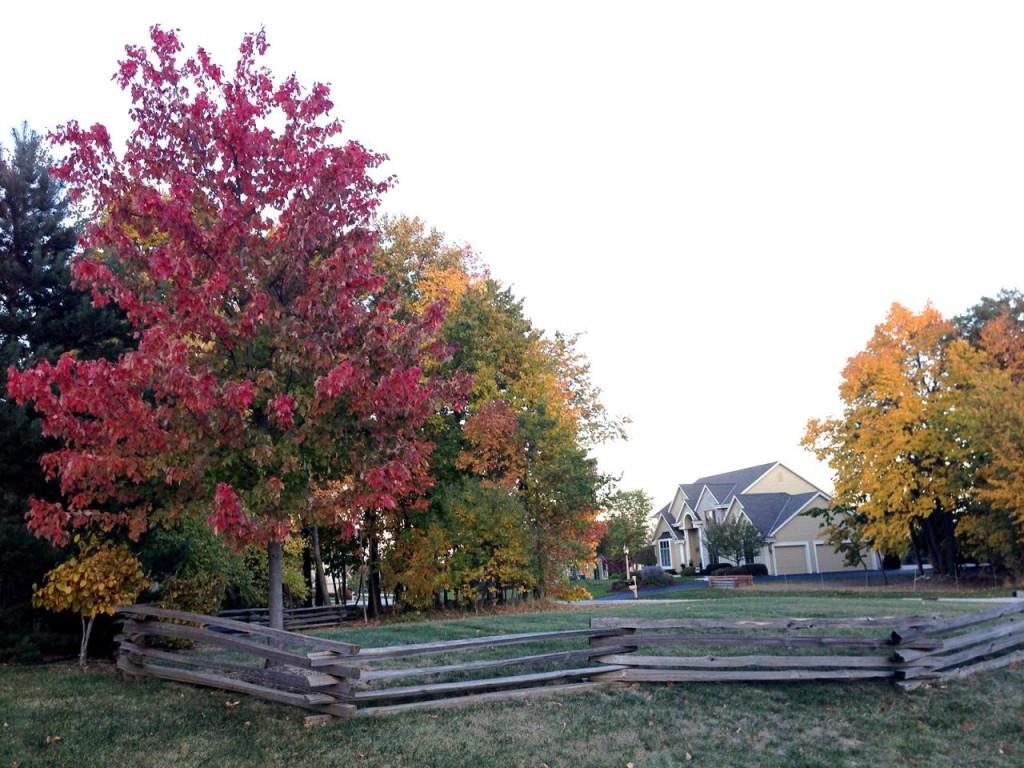 treetops1.274144205_large